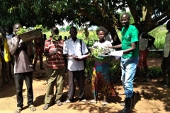 Distribution of seedlings
