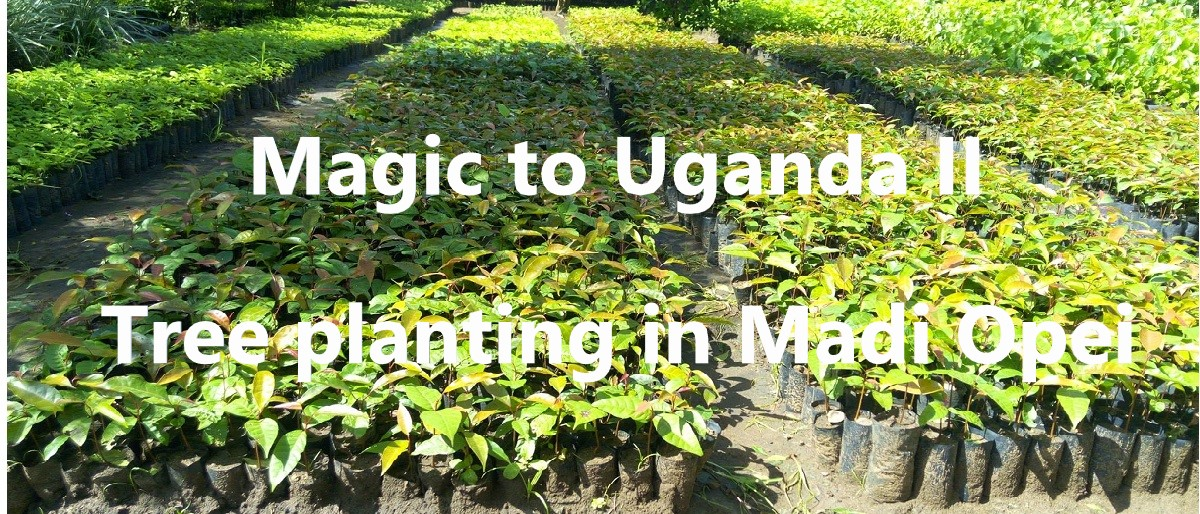 Permalink auf:Magic to Uganda II – Bäume pflanzen in Madi Opei (2020)